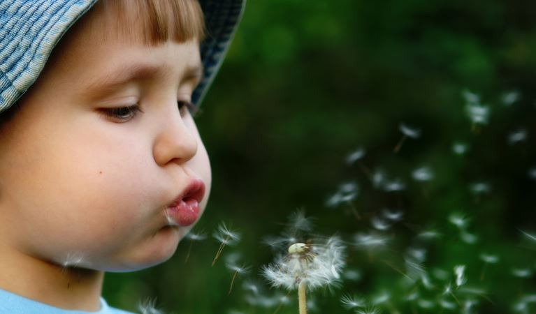 shutterstock 6593182%5b1%5d t9 boy blowing dandelion
